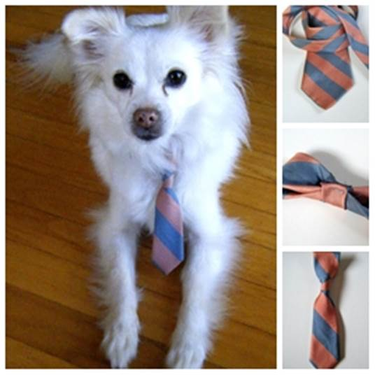 DIY Dog Neck Tie from a Recycled Neck Tie 1