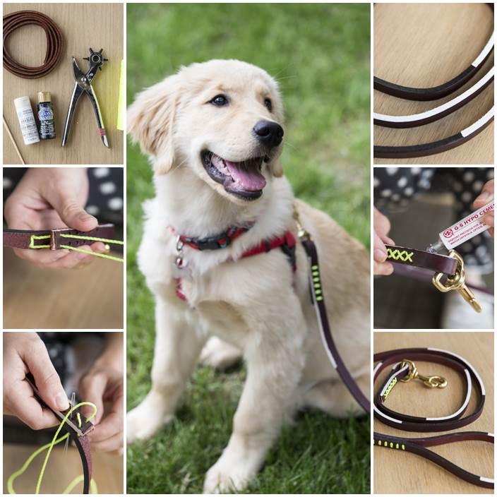 DIY Graphic Leather Dog Leash 1