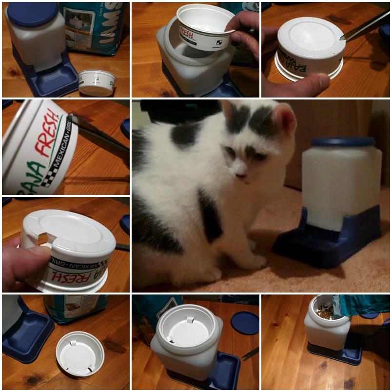 DIY Cat-Powered Automatic Cat Feeder 1