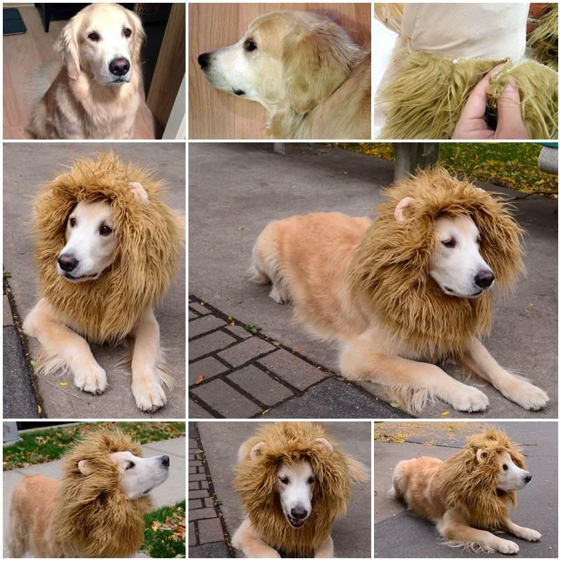 Diy Cozy Fleece Dog Coat Lovepetsdiy Com