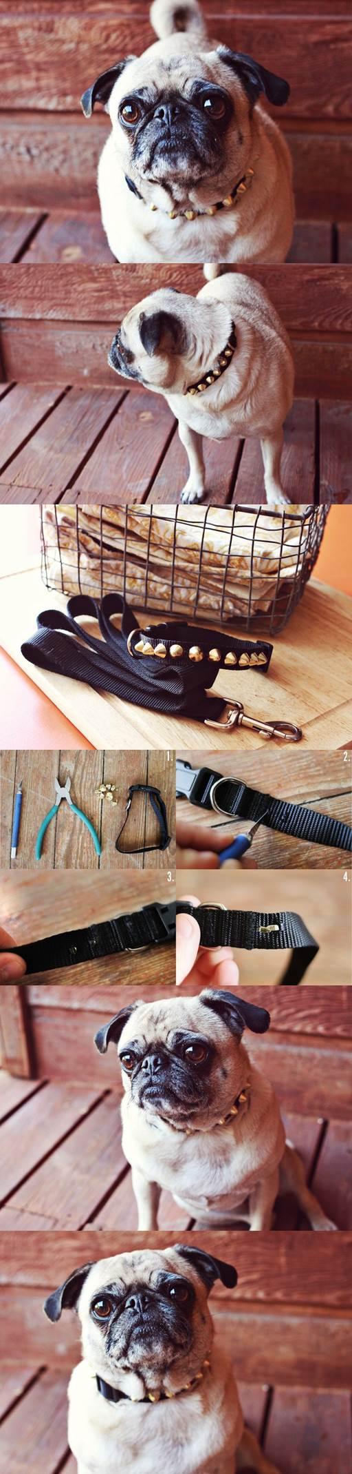DIY Studded Doggie Collar 2