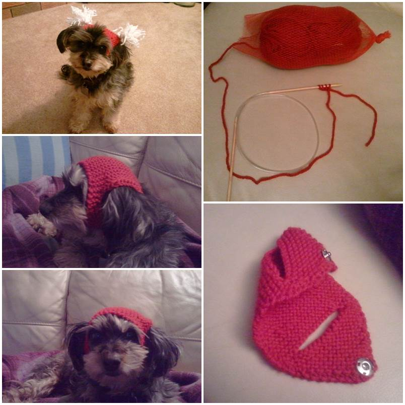 DIY Versatile Hat for Pets 1