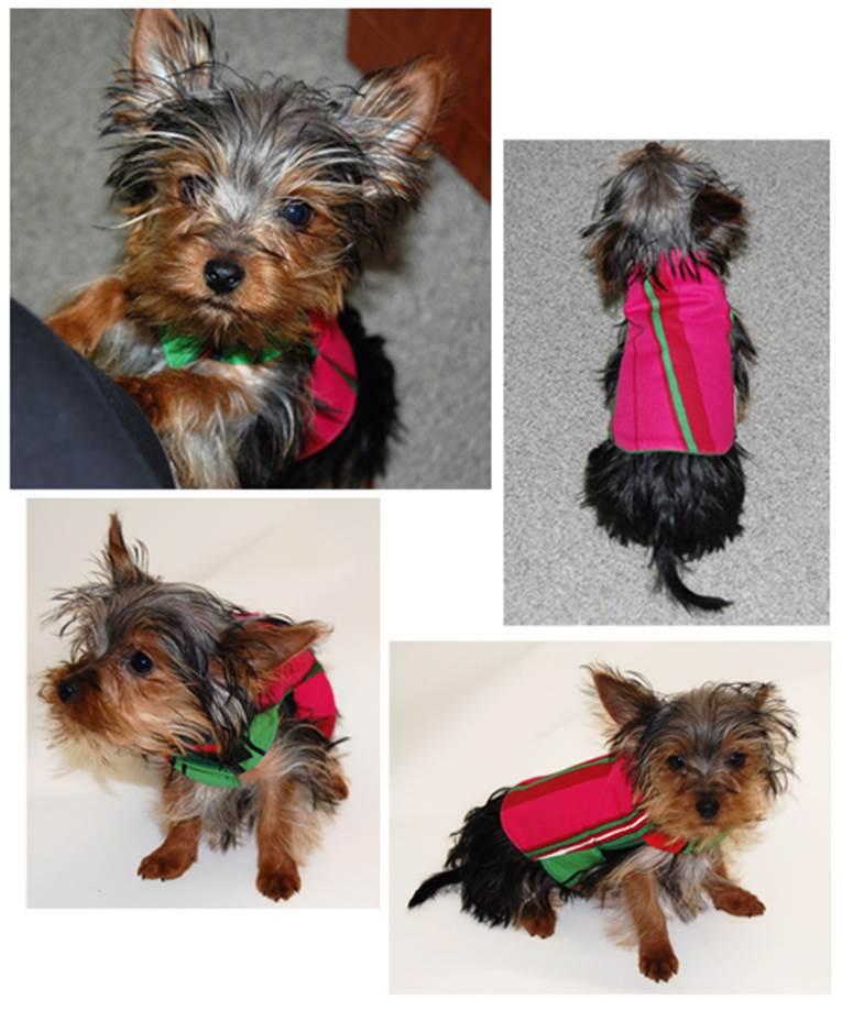 DIY Adorable Dog Jacket 1