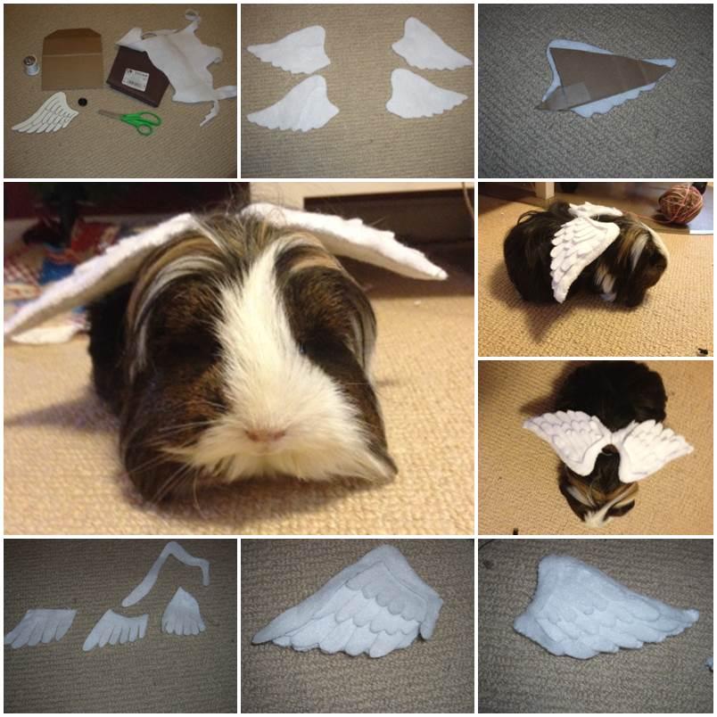 DIY Angel Wings for Guinea Pigs 1