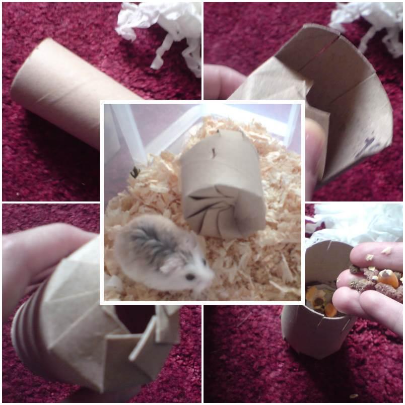 DIY Hamster Cracker Toy 1