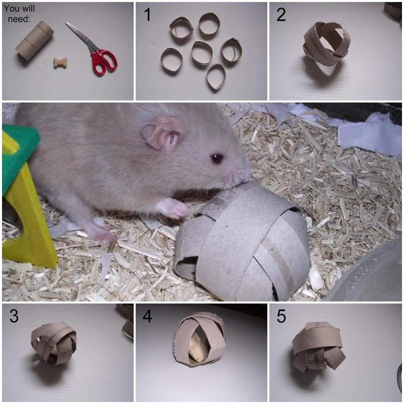 DIY Hamster Treat Ball 1