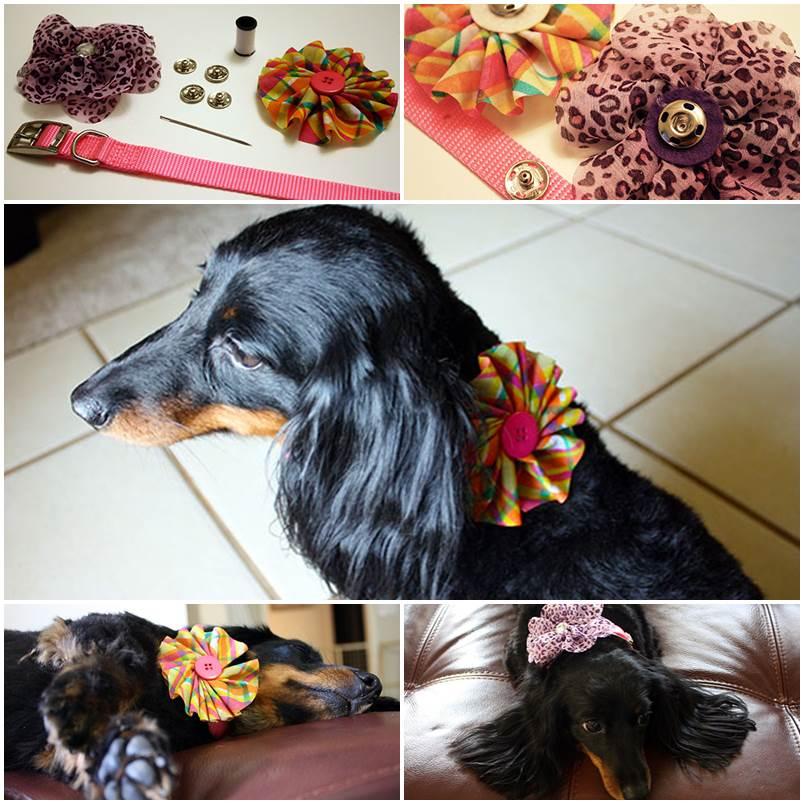 DIY Interchangeable Embellished Dog Collar 1