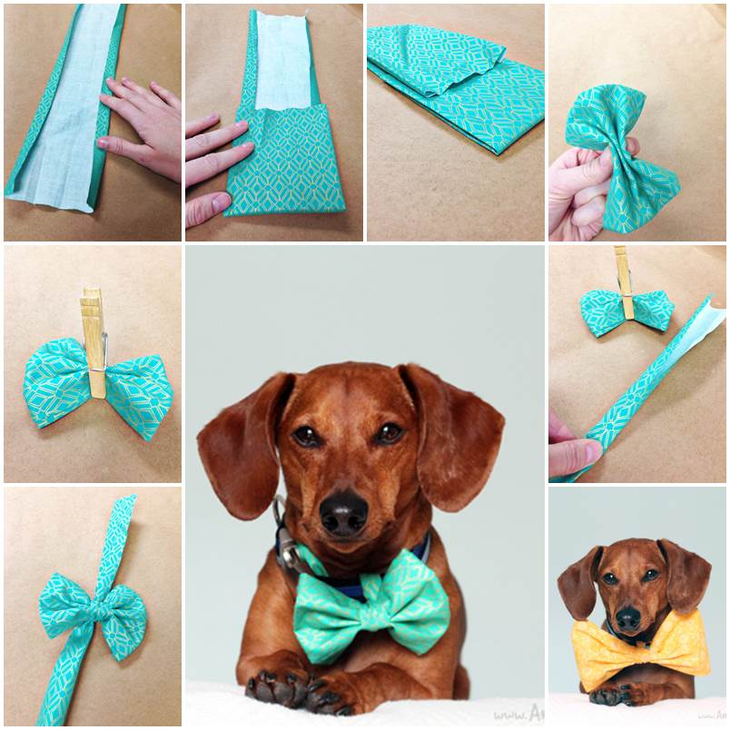 DIY No Sew Easter Bowtie for Dogs 1